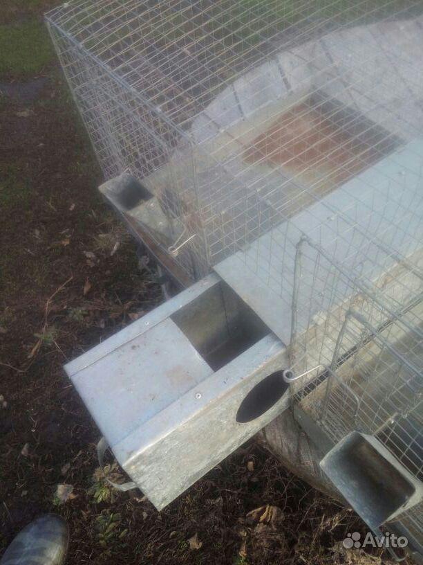 Авито сызрань клетки для кроликов купить или