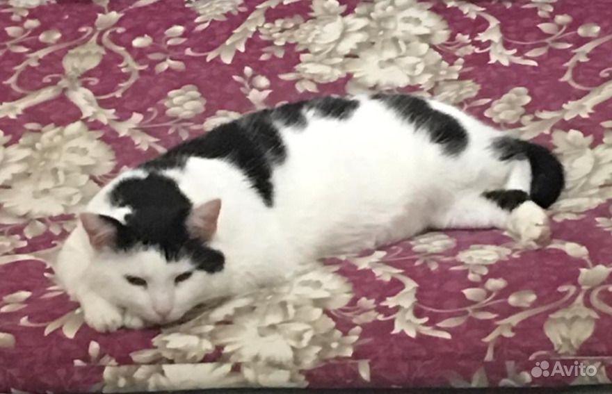 Котик в добрые руки - фотография № 1