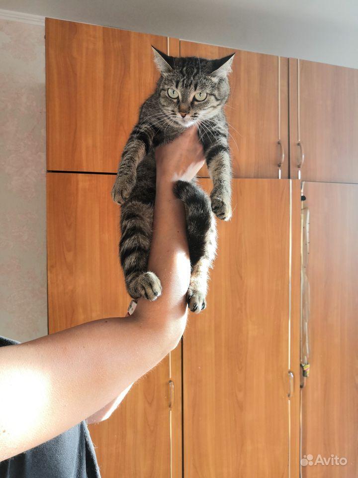В добрые руки кошки