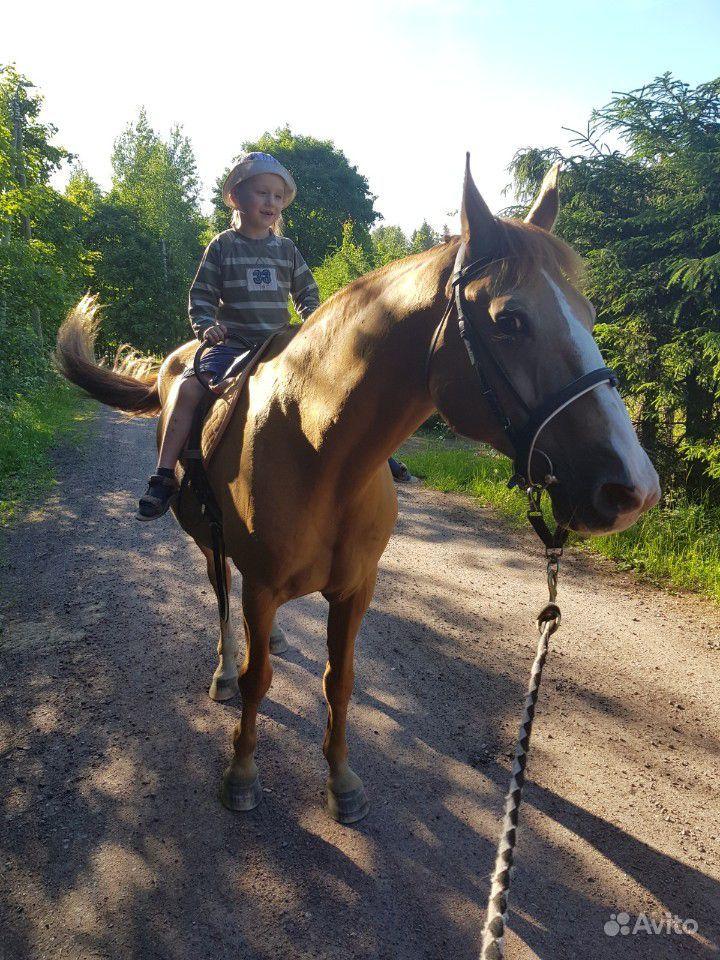 Конные прогулки и занятия верховой ездой купить на Вуёк.ру - фотография № 6