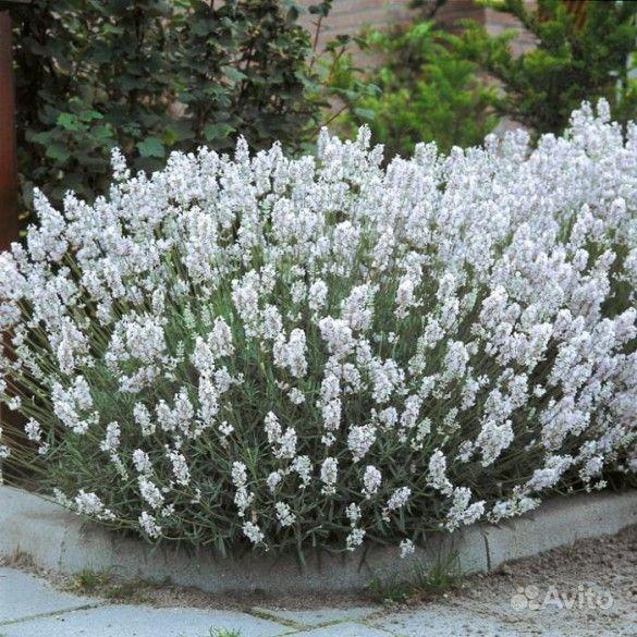 Растения купить на Зозу.ру - фотография № 8