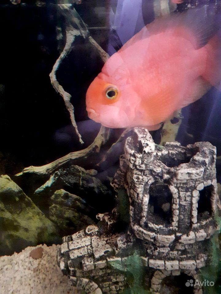Продам аквариум с попугаем купить на Зозу.ру - фотография № 2