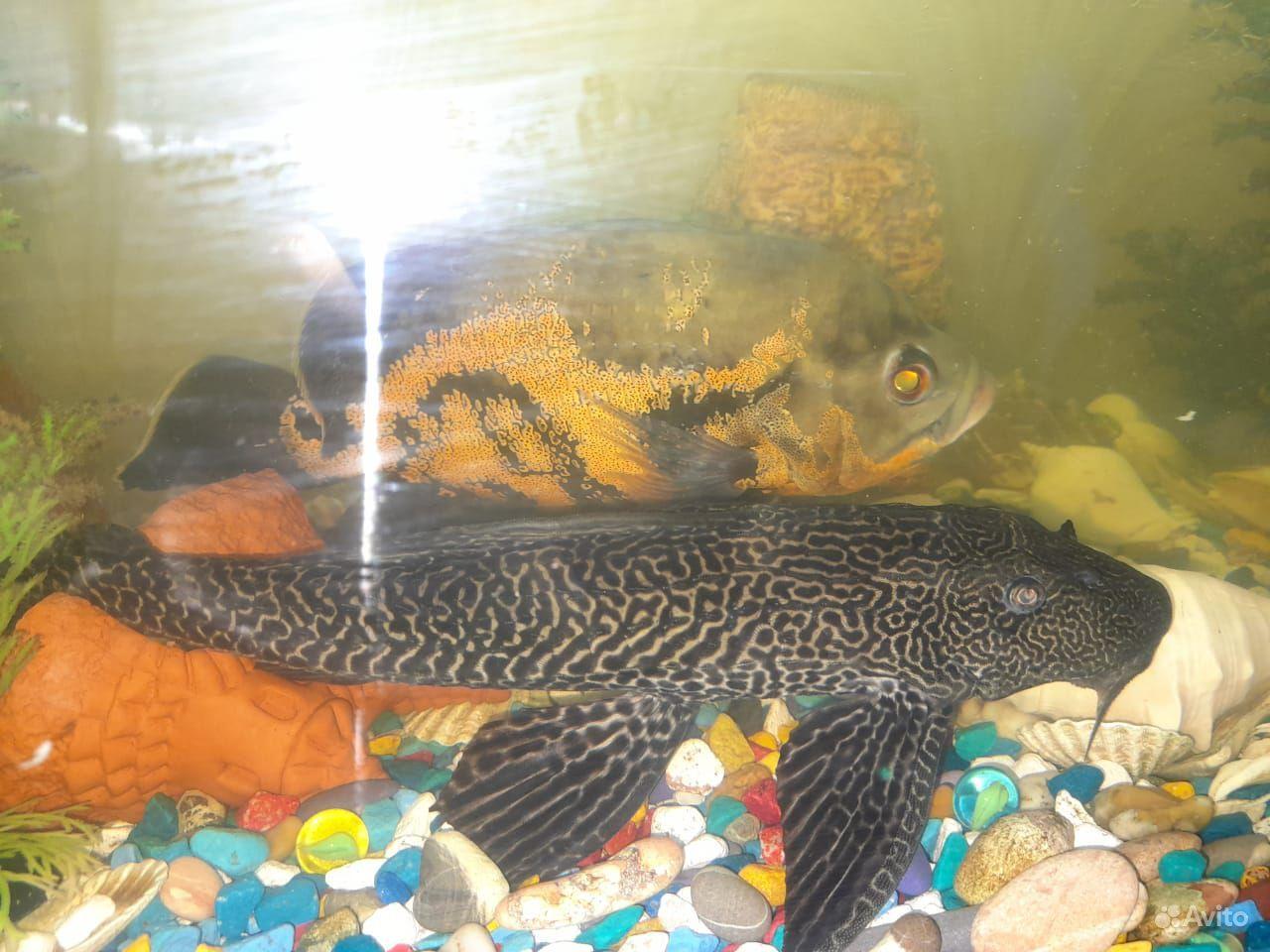 Рыбы с аквариумом и всеми удобствами для них купить на Зозу.ру - фотография № 1