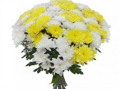 Букет из желтой и белой хризантемы