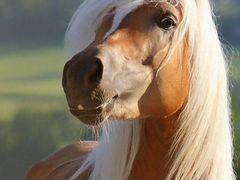 Продам лошадь с жаребенком