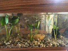 Аквариум с рыбками 50л