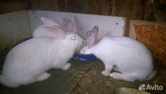 Продам кроликов-подростков купить 1