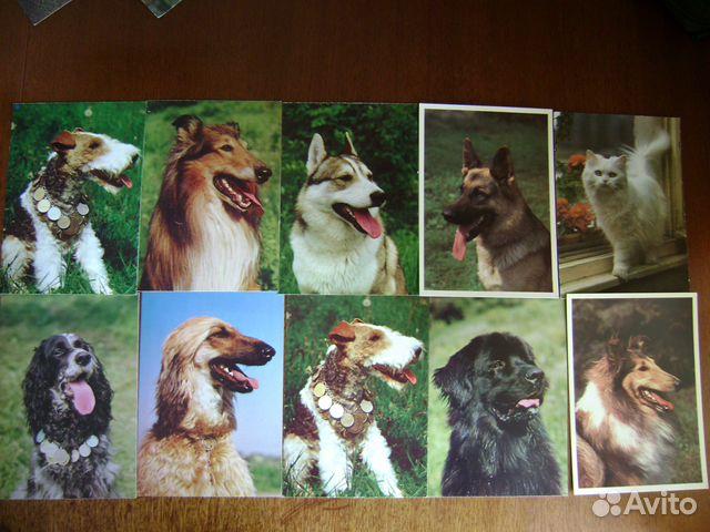 Днем рождения, открытки наши верные друзья
