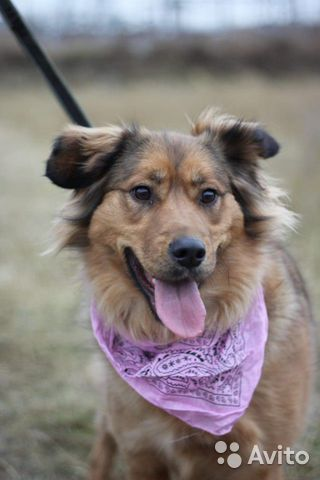 Собака из приюта в дар купить на Зозу.ру - фотография № 6