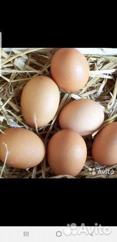 Яйцо куриное домашнее 80руб
