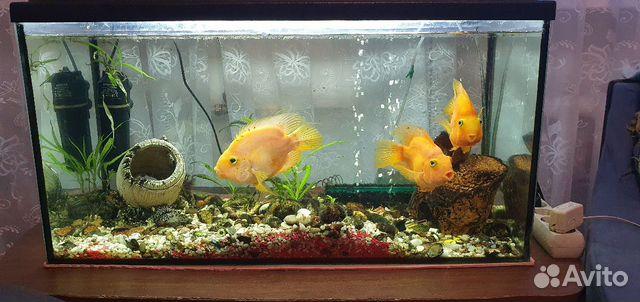 Рыбки аквариумные 89118444414 купить 3