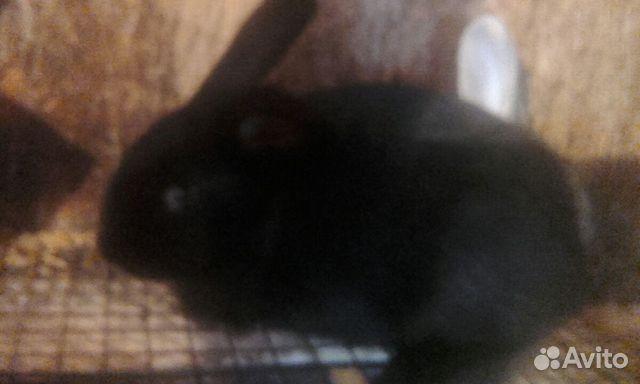 Крольчата купить 1