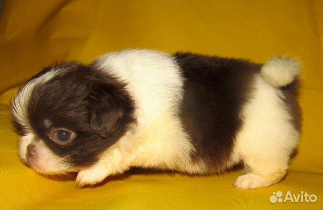 Puppies 89040704100 buy 2