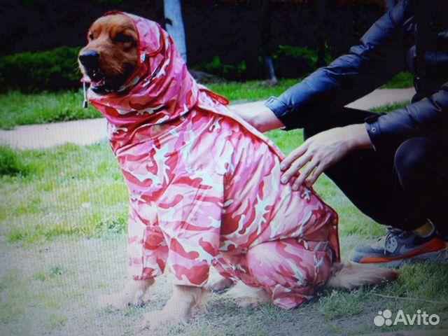 Дождевик для собак 89515899554 купить 9