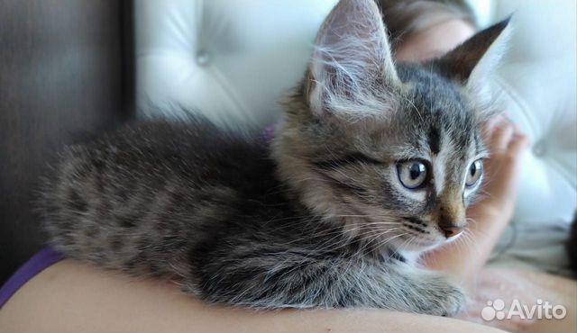 Gebe ein Kätzchen  89279273141 kaufen 1