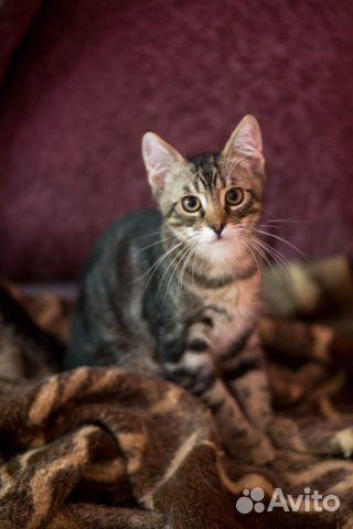Котенок в добрые руки  89155387202 купить 8