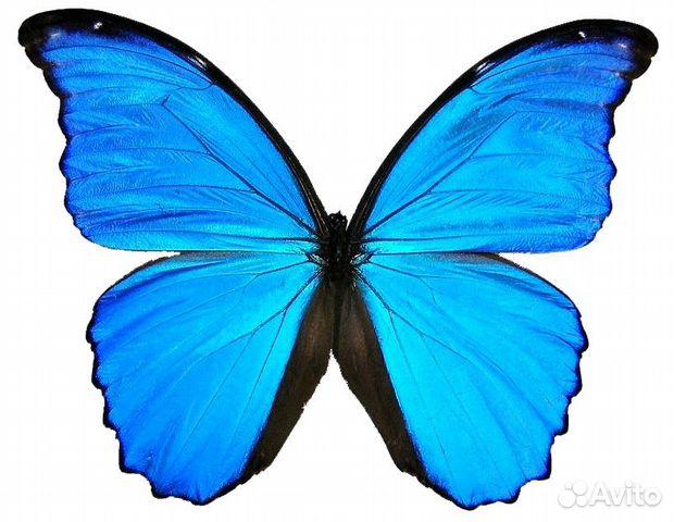 Бабочки с деньгами