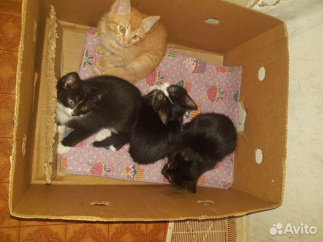 Животные  89128881558 купить 5