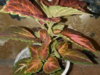 Комнатные растения с доставкой