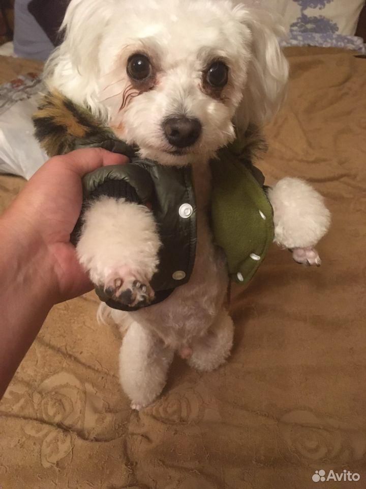 Куртка для собаки petsoo  89191738672 купить 1