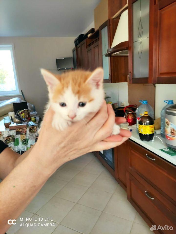Котята в добрые руки  89011218595 купить 8