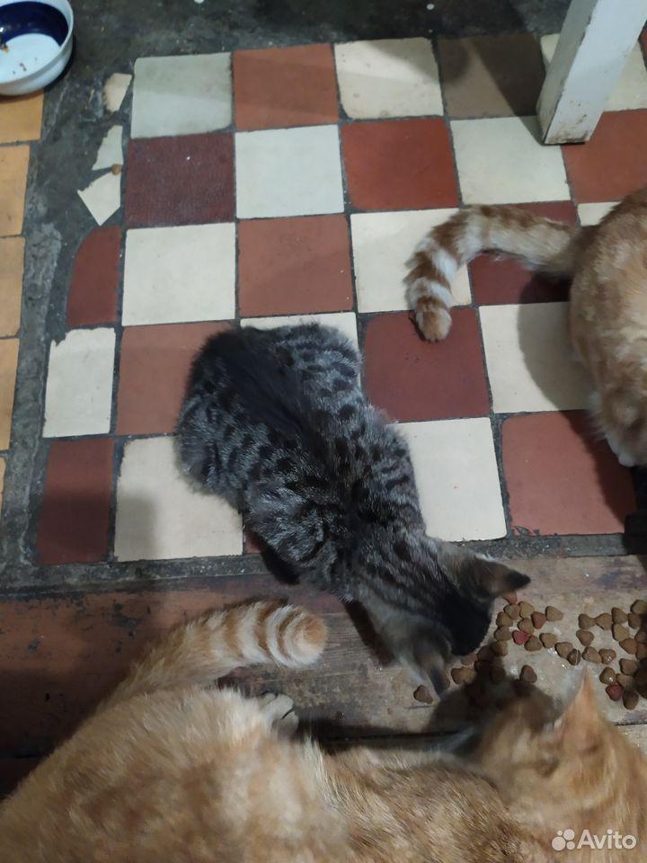 Котятата  89788330796 купить 3