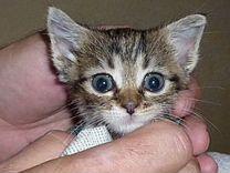 Василиска 1 месяц — Кошки в Геленджике