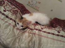 Кошечка девочка Масечка