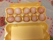 Инкубационное яйцо, цыплята китайских шёлковых кур