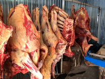 Продам говядину Возможено доставка