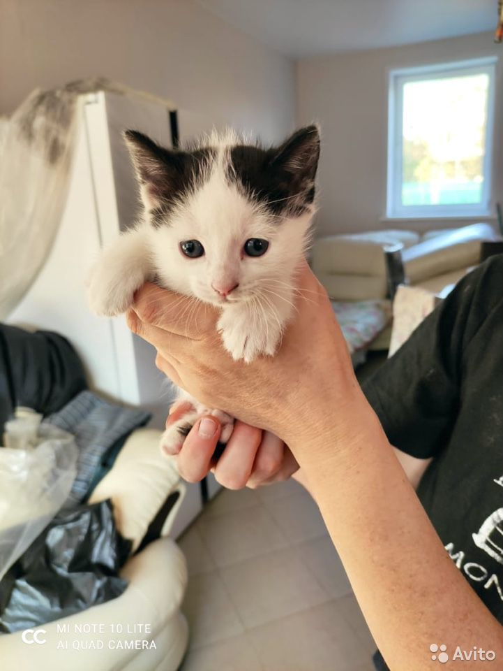 Котята в добрые руки  89011218595 купить 5