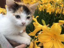Котёнок маленькая умная девочка