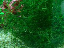 Растения в Ваш аквариум
